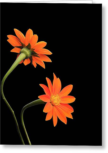 Krasimir Tolev Photography Greeting Cards - Still Life with Flowers Greeting Card by Krasimir Tolev