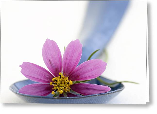 Still Life With Pink Flower On A Blue Spoon Greeting Card by Frank Tschakert