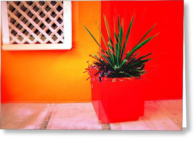 Shudder Greeting Cards - Still Life With Planter Greeting Card by David Coleman