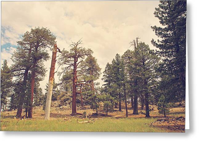Tall Trees Greeting Cards - Still Proud Greeting Card by Laurie Search