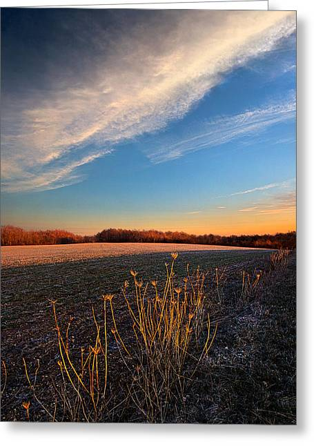 Geographic Greeting Cards - Still Waiting Greeting Card by Phil Koch