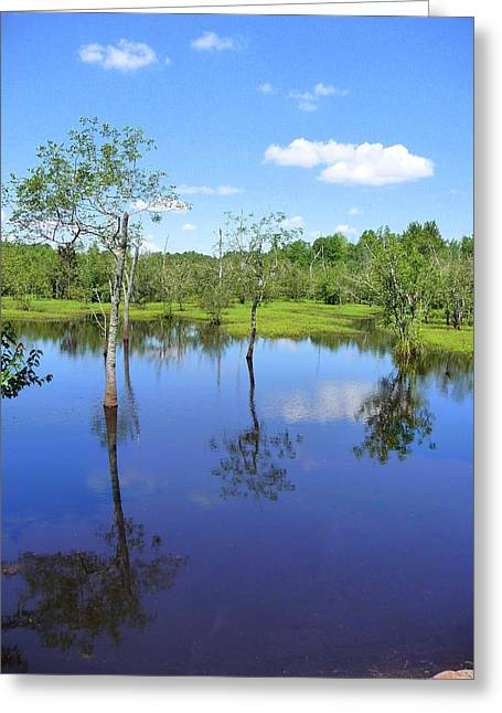 Trees Reflecting In Water Greeting Cards - Still Waters Greeting Card by Jim Whalen