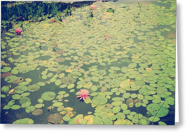 Joy Stclaire Greeting Cards - Still Waters Greeting Card by Joy StClaire