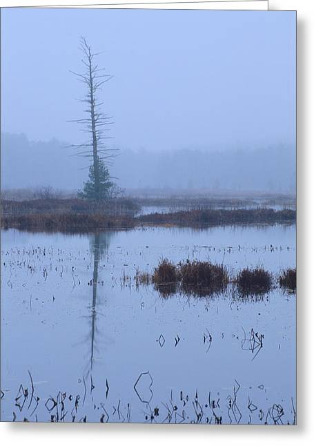 Tiger Musky Greeting Cards - Stillness on the Flowage - Northwoods Greeting Card by Bruce Thompson