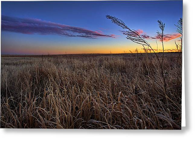 Grasslands Greeting Cards - Stillness Greeting Card by Thomas Zimmerman