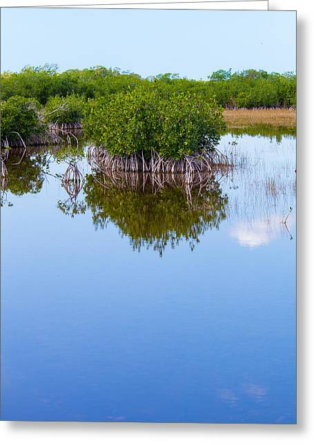 Mangrove Forest Greeting Cards - Stilted Mangle Greeting Card by W Chris Fooshee