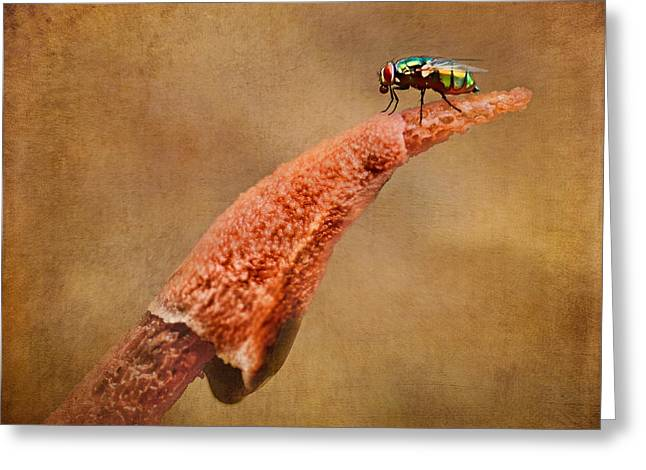 Fungal Greeting Cards - Stinkhorn Mushroom - Fly Greeting Card by Nikolyn McDonald
