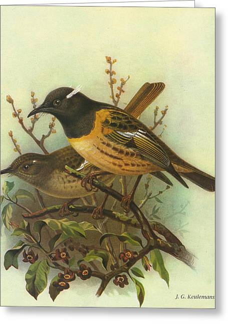 J.g. Greeting Cards - Stitchbird Greeting Card by J G Keulemans
