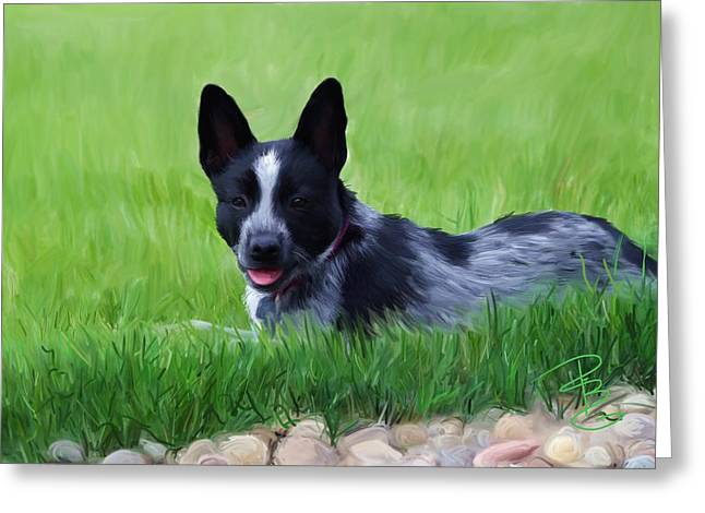 Queensland Blue Heeler Greeting Cards - Stock dog named Brook Greeting Card by Debra Baldwin