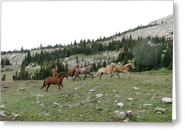 Equus Caballus Greeting Cards - Stock Wrangling In Greeting Card by Pam Little