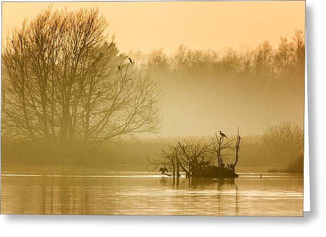Cormorants Greeting Cards - Stodmarsh Greeting Card by Ian Hufton