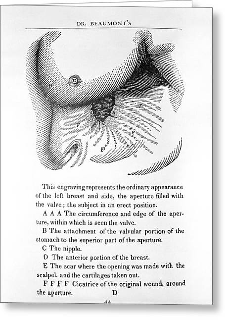 Stomach Digestion Research Greeting Card by Library Of Congress