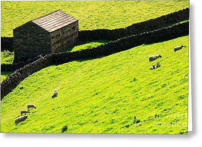 Stone Barn Greeting Cards - Stone barn and sheep grazing on a steep hillside in Swaledale Greeting Card by Louise Heusinkveld