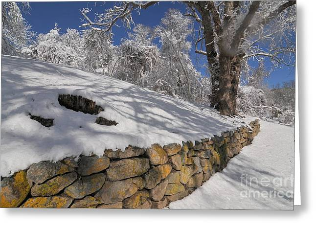 Stone Cold Greeting Card by Catherine Reusch  Daley