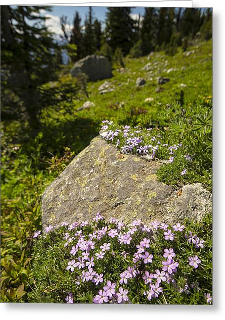 Backpacking Greeting Cards - Stone Garnish and Trail Glitter Greeting Card by Aaron S Bedell