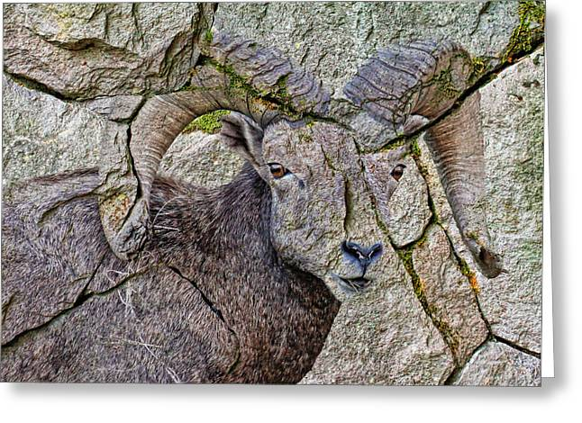 Sheep On Rocks Greeting Cards - Stone Sheep Greeting Card by Steve McKinzie