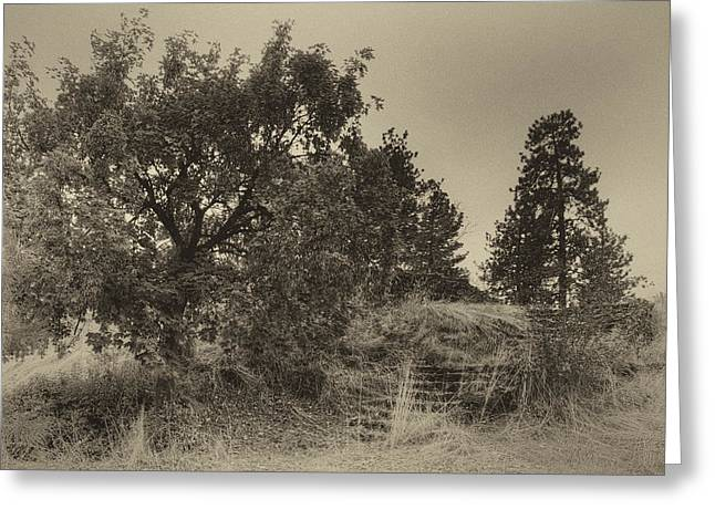 Spokane Greeting Cards - STONE STEP RUINS to NOWHERE Greeting Card by Daniel Hagerman