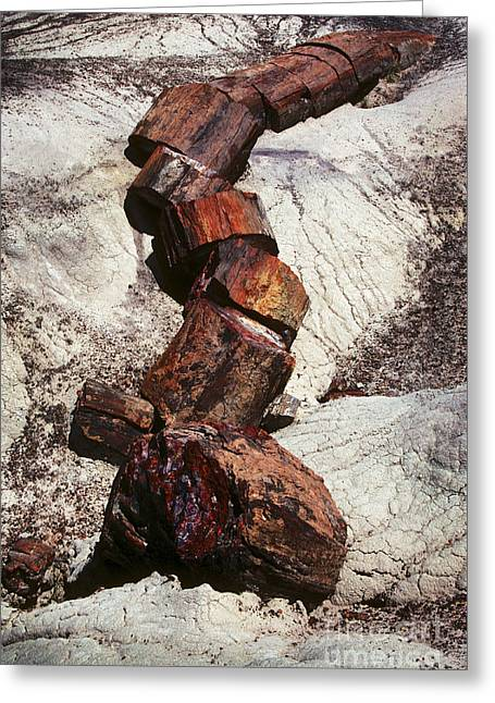 Petrified Forest Greeting Cards - Stone Trees - 337 Greeting Card by Paul W Faust -  Impressions of Light
