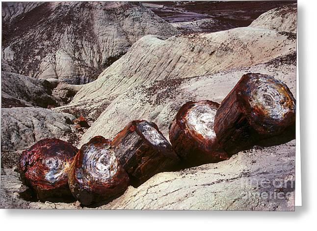 Petrified Forest Greeting Cards - Stone Trees - 360 Greeting Card by Paul W Faust -  Impressions of Light