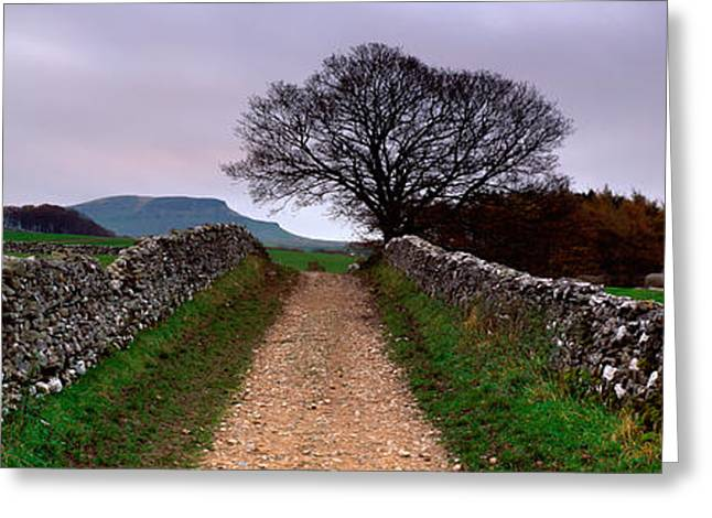 Bare Trees Greeting Cards - Stone Walls Along A Path, Yorkshire Greeting Card by Panoramic Images