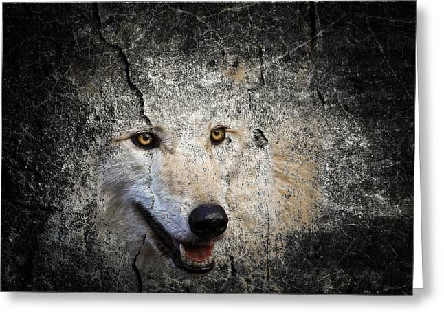 Preditor Greeting Cards - Stone Wolf Greeting Card by Steve McKinzie