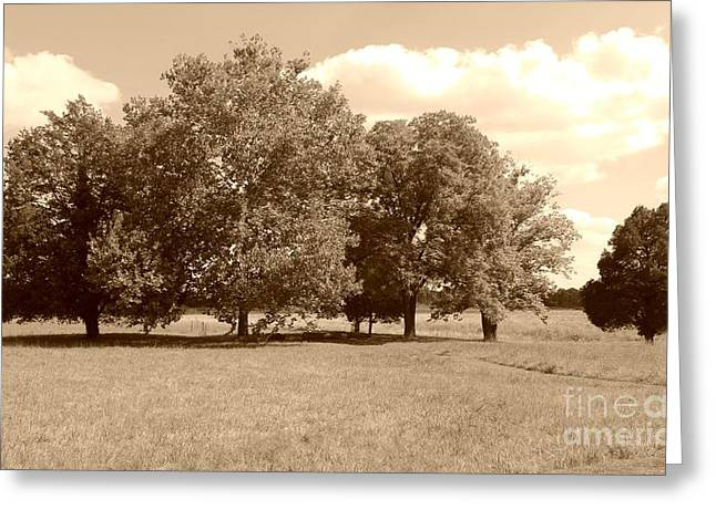 Tennessee Historic Site Greeting Cards - Stones River Battlefield Greeting Card by Connie Mueller