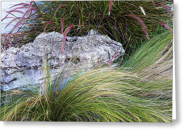 Green Burgandy Greeting Cards - Stones with Flowing Grass Greeting Card by Linda Phelps