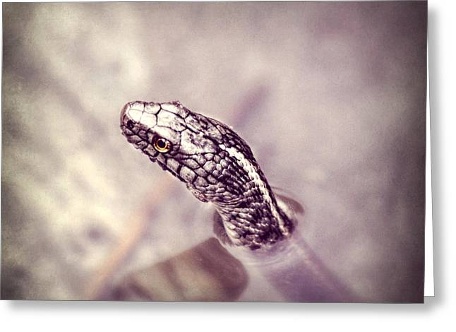 Silver Eye Shadow Greeting Cards - Stony Stare Greeting Card by Melanie  Lankford Photography