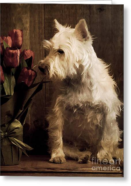 Westie Greeting Cards - Stop and Smell the Flowers Greeting Card by Edward Fielding