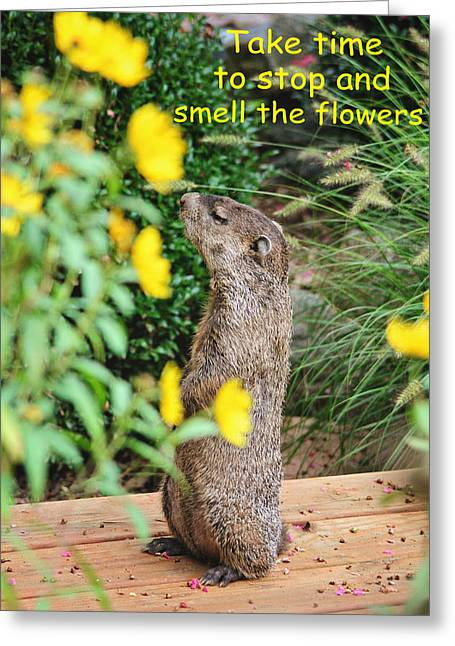 Groundhog Digital Greeting Cards - Stop and Smell the Flowers Greeting Card by Trina  Ansel