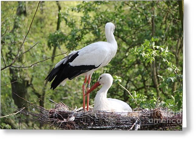 Enjoying Greeting Cards - Storks nesting Greeting Card by Jackie Mestrom