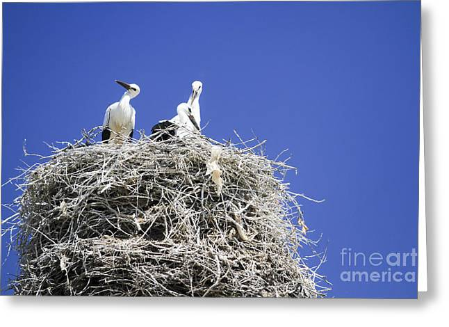 Armenia Greeting Cards - Storks Nesting  Greeting Card by Vladi Alon