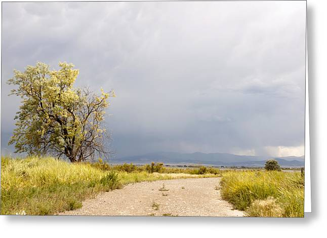 Moyers Greeting Cards - Storm at Lake Helena Greeting Card by Dana Moyer