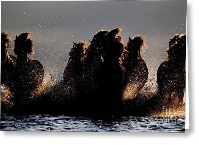 Horse Run Greeting Cards - Storm Horses Greeting Card by Carol Walker