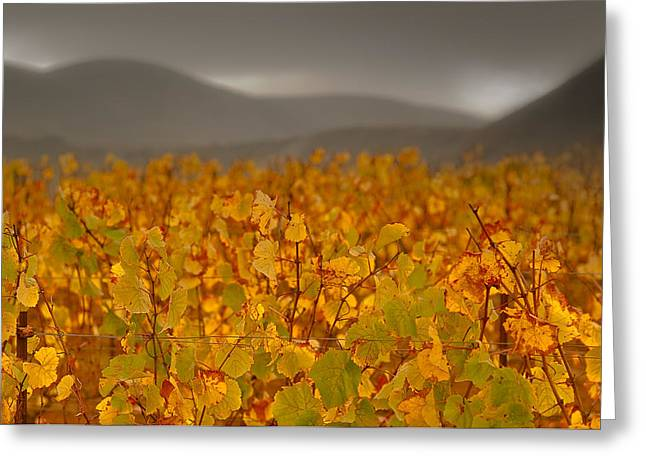 Photos Of Autumn Greeting Cards - Storm Over Vinyard - Landscape Photos Greeting Card by Laria Saunders