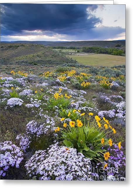 Phlox Greeting Cards - Storm over Wildflowers Greeting Card by Mike  Dawson