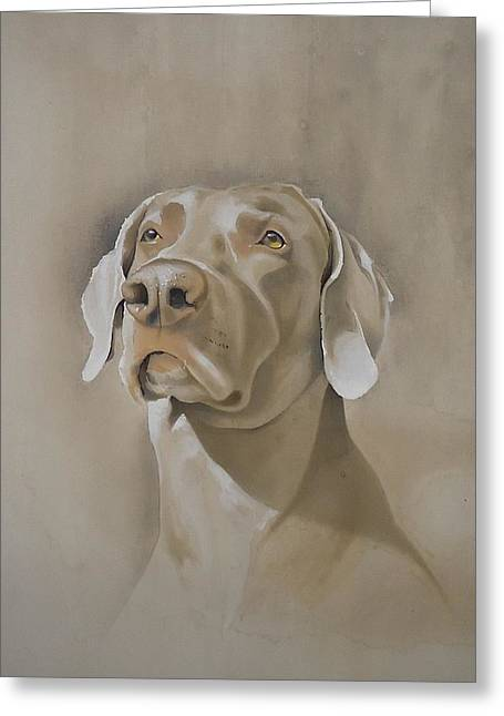 Breeds Greeting Cards - Storm the Weimaraner 2 Greeting Card by David Mullins