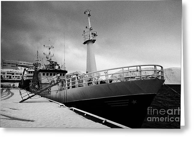 Scandanavian Greeting Cards - stormfuglen trawler berthed in Honningsvag harbour finnmark norway europe Greeting Card by Joe Fox