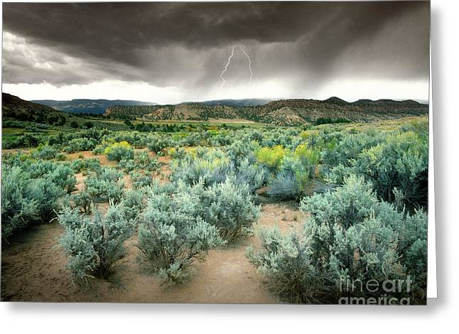 Storms Never Last Greeting Card by Edmund Nagele