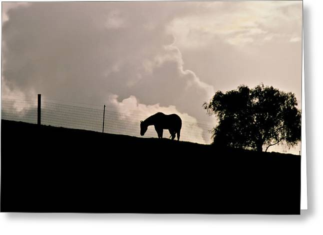 Lone Horse Greeting Cards - Stormy Afternoon Greeting Card by Art Block Collections