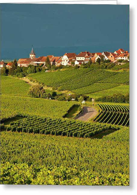 Stormy Clouds Over Vineyards Greeting Card by Brian Jannsen