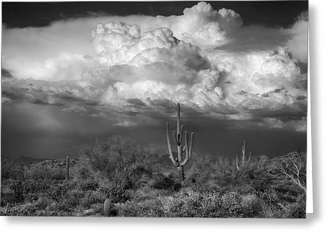 Monsoon Clouds Greeting Cards - Stormy Desert Skies in Black and White  Greeting Card by Saija  Lehtonen