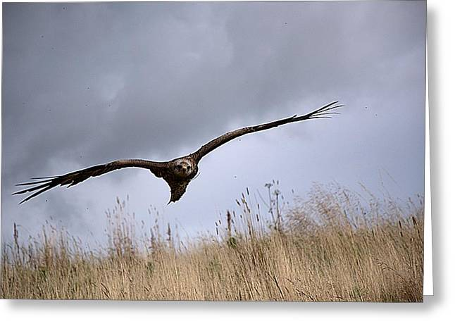 Kite Greeting Cards - Stormy flight Greeting Card by Olivia Egely