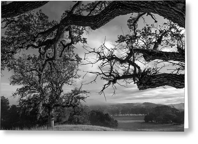 Resilience Greeting Cards - Stormy Oaks Greeting Card by Arnaldo Torres