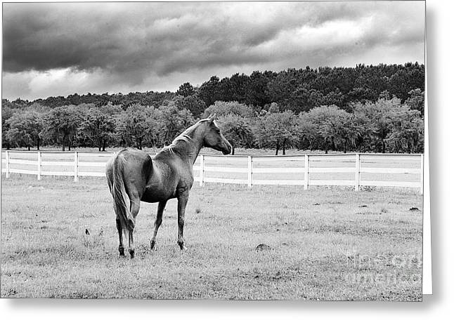 Lightning Photographer Greeting Cards - Stormy Pasture Greeting Card by Scott Hansen