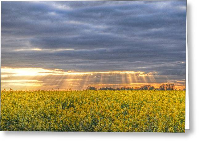 Open Field Greeting Cards - Stormy Sunset Over Rapeseed Fields Greeting Card by Gill Billington