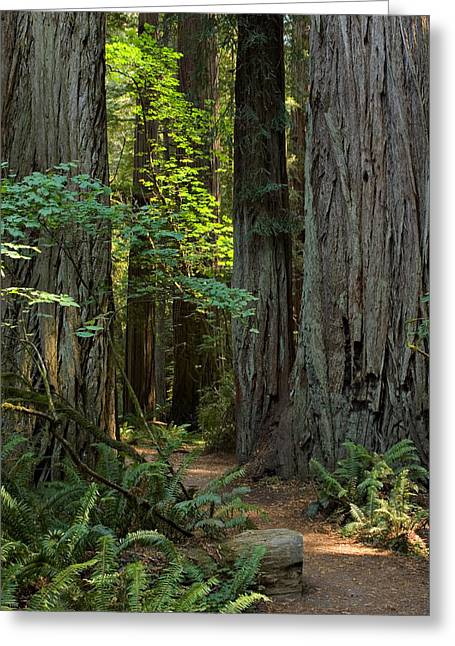 Damnation Greeting Cards - Stout Grove 1 Greeting Card by Ralph Nordstrom