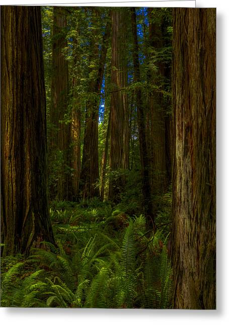 Damnation Greeting Cards - Stout Grove Impression 2013 Greeting Card by Ralph Nordstrom