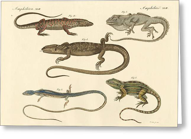Bengal Drawings Greeting Cards - Strange amphibians Greeting Card by Splendid Art Prints