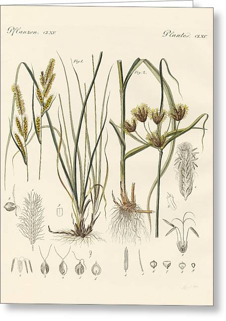 Strange Grasses Greeting Card by Splendid Art Prints